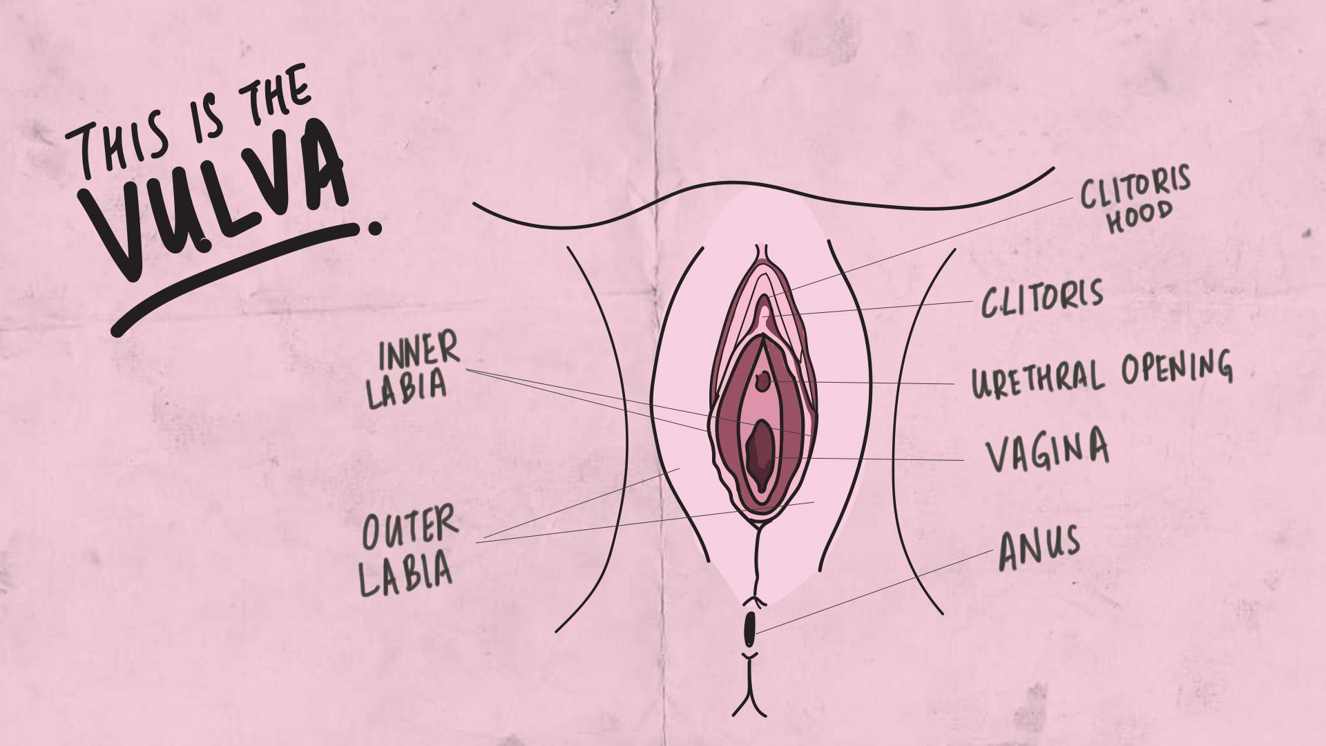 introducem penisul în vulvă